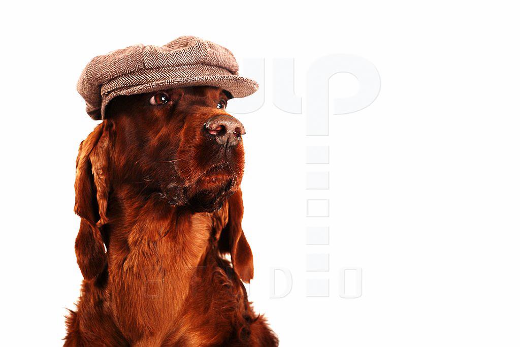 Opal | portret psa