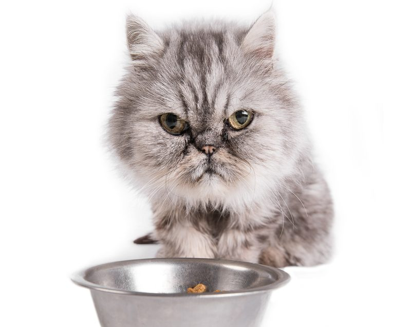 Bell- nasza ulubiona kocia modelka