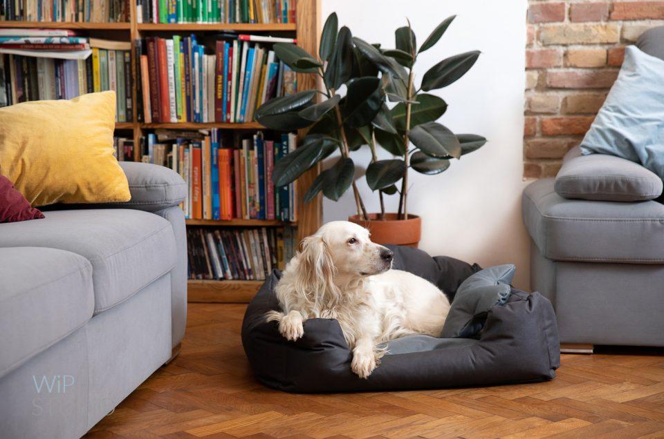 Posłanie dla psa – fotografia produktowa